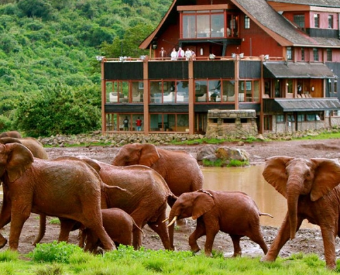 6 days Masai Mara Safari
