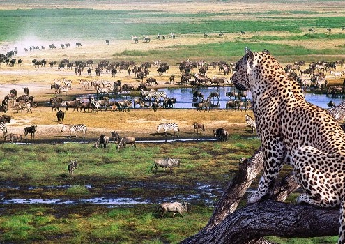 3 Days Ngorongoro Serengeti safari
