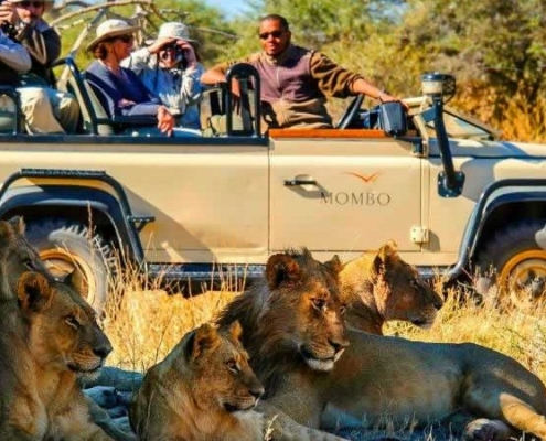4 days budget Masai Mara safari