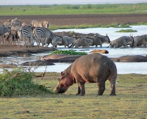 3 Days Serengeti Safari