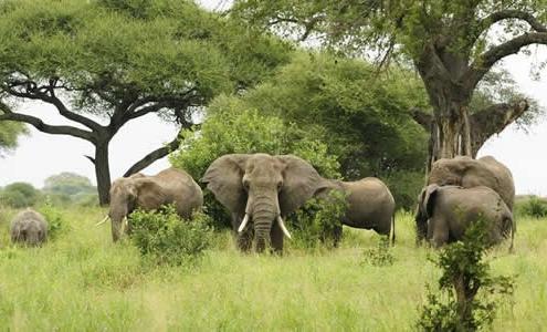 8 days Uganda Safari