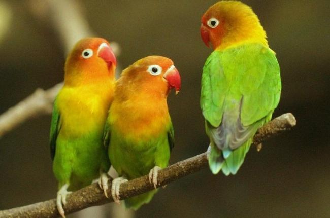Serengeti national park birds