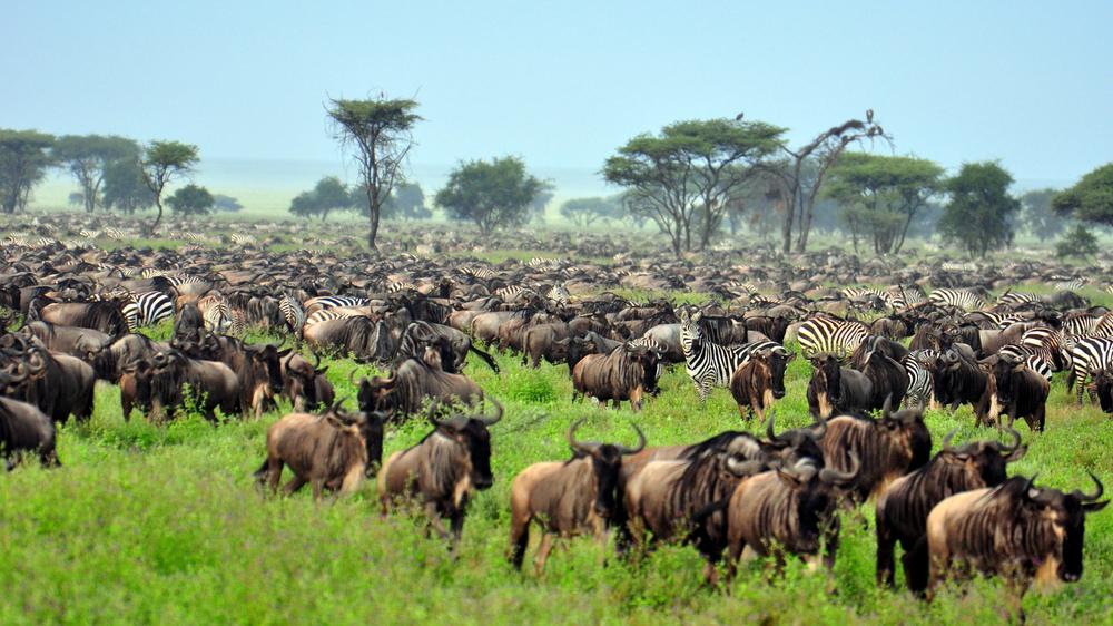 Serengeti National Park animals