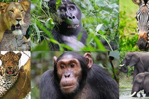 Top tourist activities in Uganda