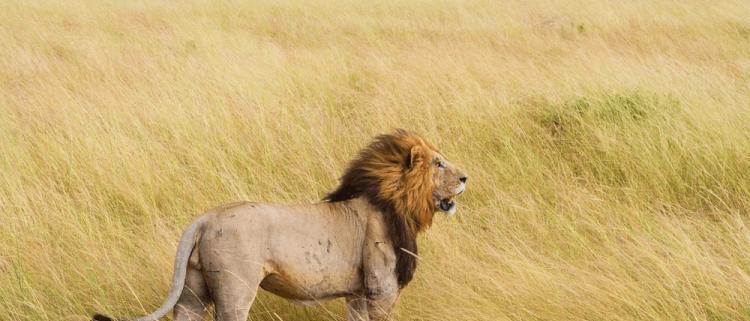 3 Day Serengeti Safari