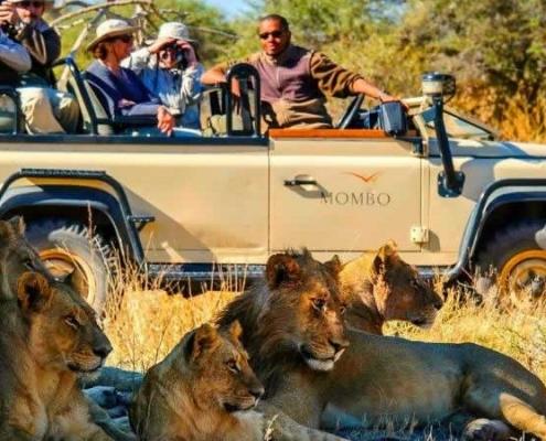 4 days budget Masai Mara safari