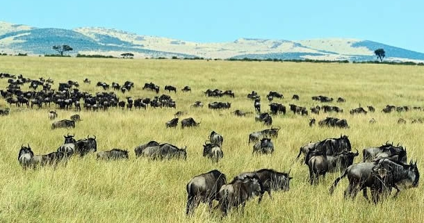 6 Days Masai Mara and Bwindi safari