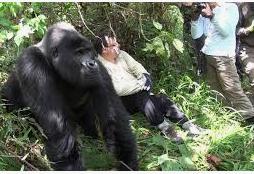2 Days Rwanda Gorilla Trekking Tour