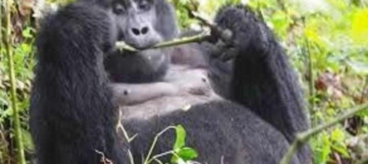 6 Days Uganda and Kenya safari